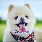 all_blue_cebu