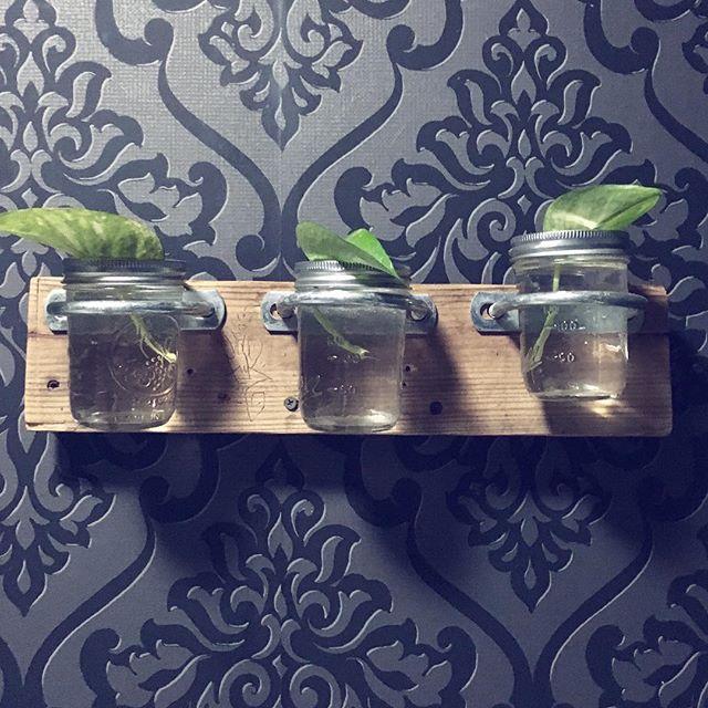 Plant goals                    #plantgoals #greenthumb