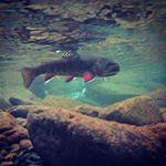 randrflyfishing