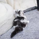 garfield_cats_
