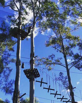 treesadventureyarramundi