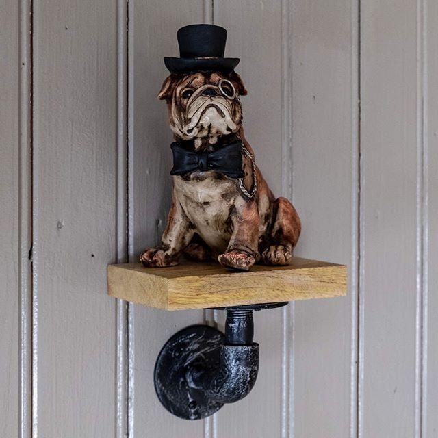 Äh, det är bara en söt hund på en liten rörhylla