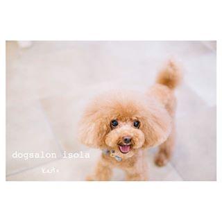 isola_dog