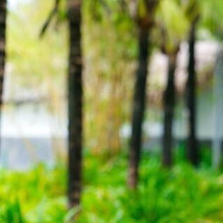 forestforthetreesdanang