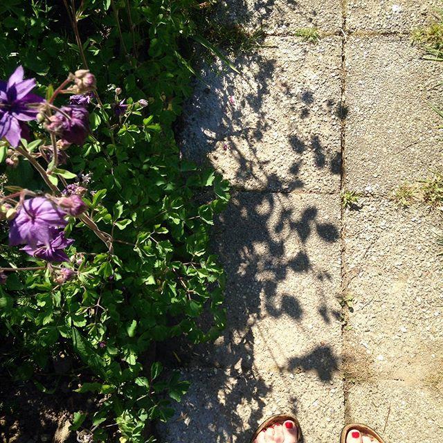 Ombres et lumière au jardin #vuedehaut #pieds #ancolies ...