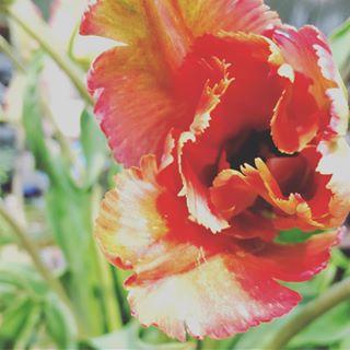 happycanyonflowers