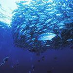marinehouse_seasir_official