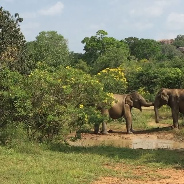 English version below ⬇️) Quand on voyage au Sri Lanka, on peut