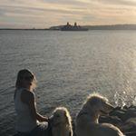 sailingdoodles