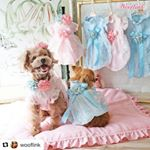 boutiquefordogs